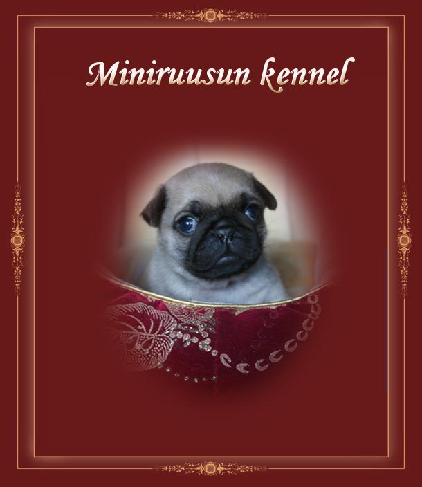 Miniruusun kennel